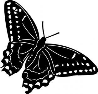 Butterflies8.jpg