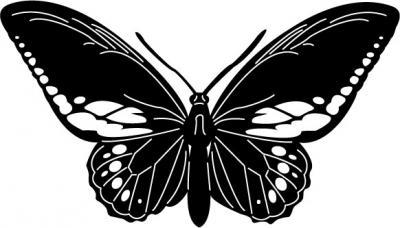 Butterflies9.jpg