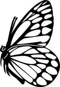 Butterflies16.jpg
