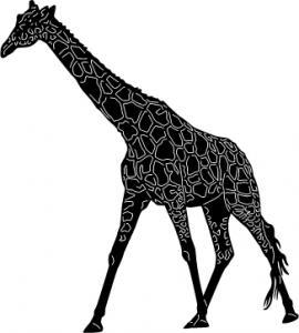 Safari-Animal-12.jpg