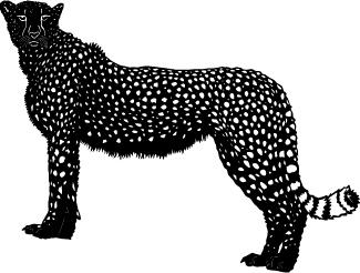Safari-Animal-35.jpg
