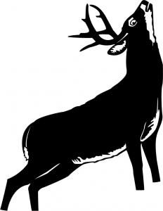 Animals1-65.jpg